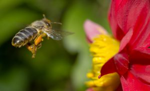 Monsanto's Pesticides Are Partly Responsible for the Collapse of the Bee