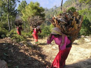 Nepal Gearing Up to Draft Agroforestry Policy