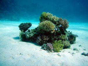 Diver Films Sea of Plastic off Nusa Penida near Bali