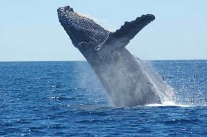 When the world sang with whales