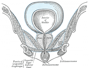Better orgasms and no leaks: Tips for a strong pelvic floor