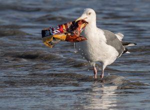 Marine plastic: Hundreds of fragments in dead seabirds