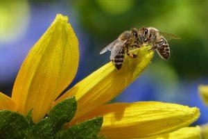Volksbegehren Artenvielfalt – Rettet die Bienen
