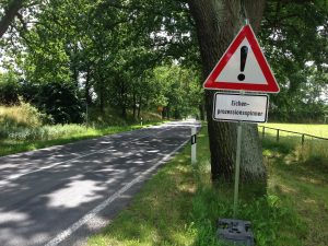 Toxic processionary caterpillar plague spreads across Europe