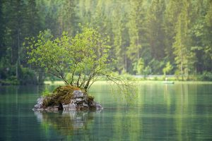 Adding 1 billion hectares of forest could help check global warming
